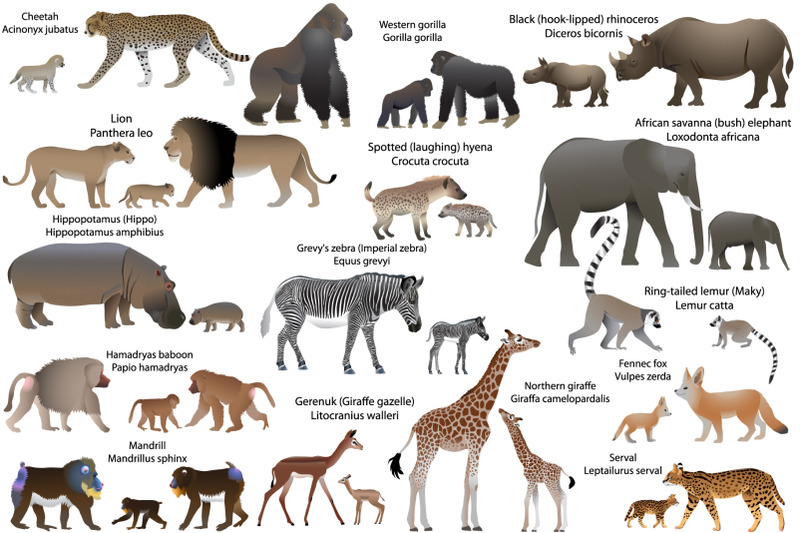 15-animal-species-of-africa-with-cubs