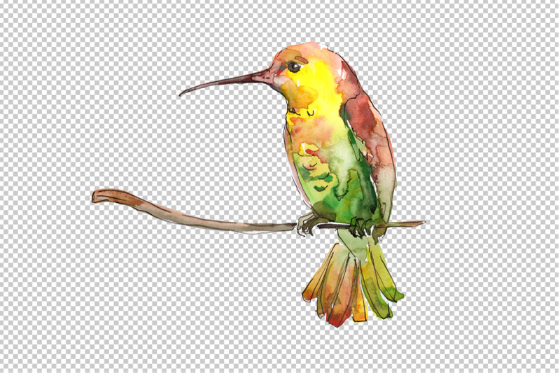 hummingbird-bird-family-watercolor-png
