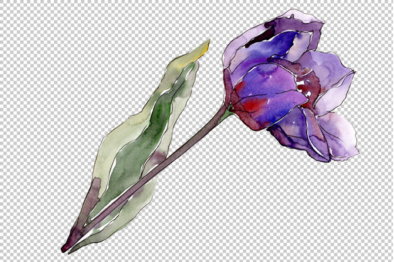 flowers-tulips-cute-compliment-watercolor-png