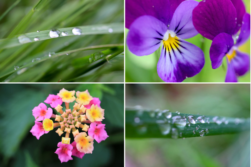 50-floral-macro-backgrounds