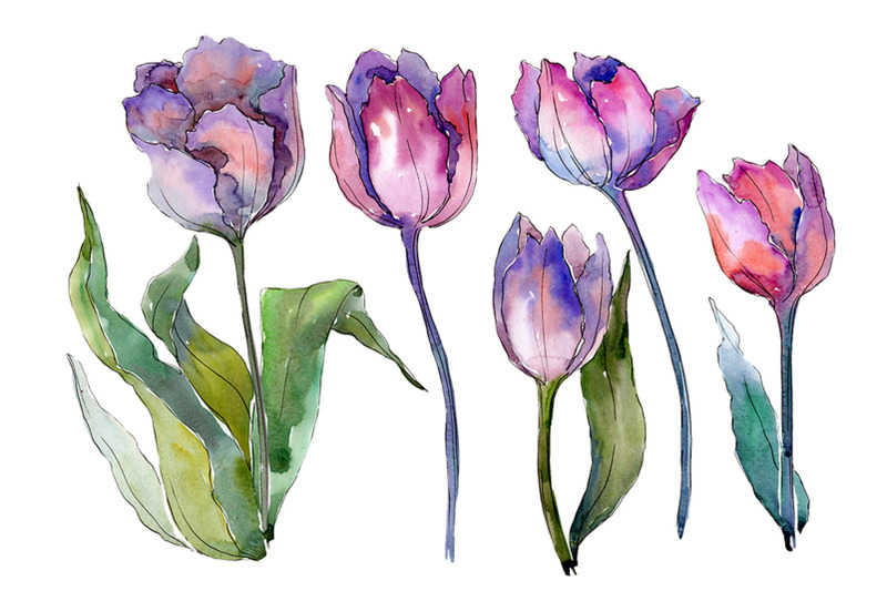 bouquet-with-tulips-diodorus-watercolor-png