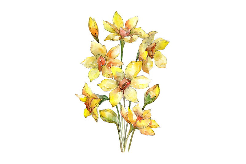 bouquet-of-narcissus-yellow-flower-watercolor-png
