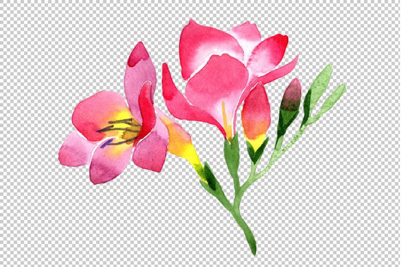 pink-freesia-flower-watercolor-png