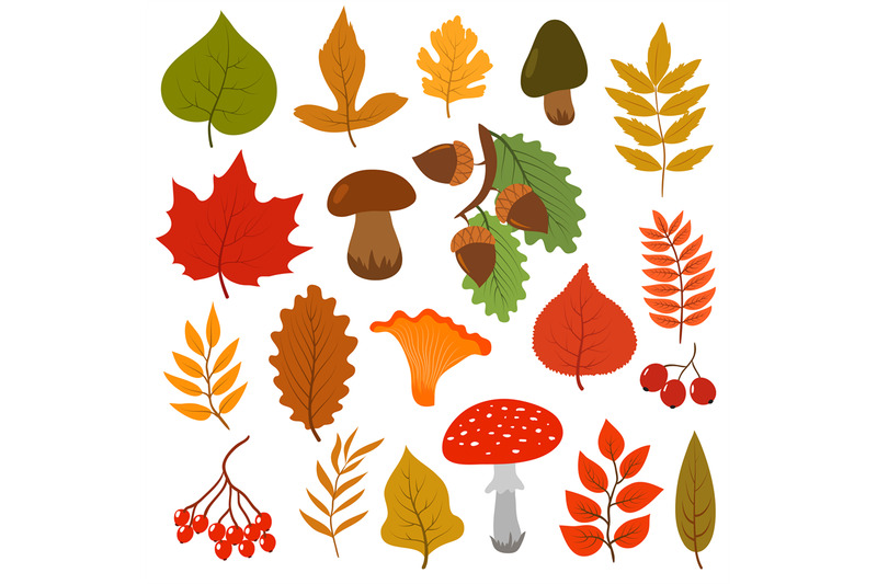 yellow-autumn-leaves-mushrooms-and-berries-fall-forest-elements-vect