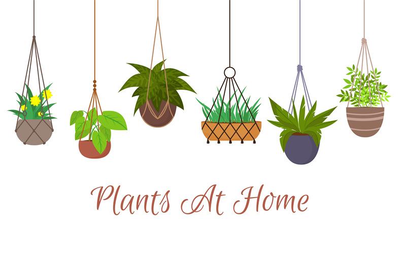 indoor-green-plants-in-pots-hanging-on-decorative-macrame-hangers-vect
