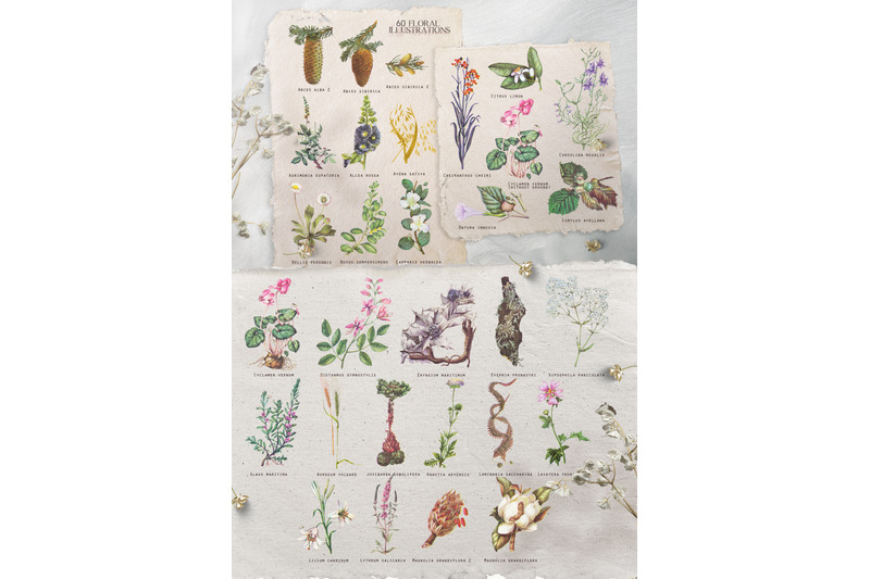 vintage-botanical-set-cornucopia