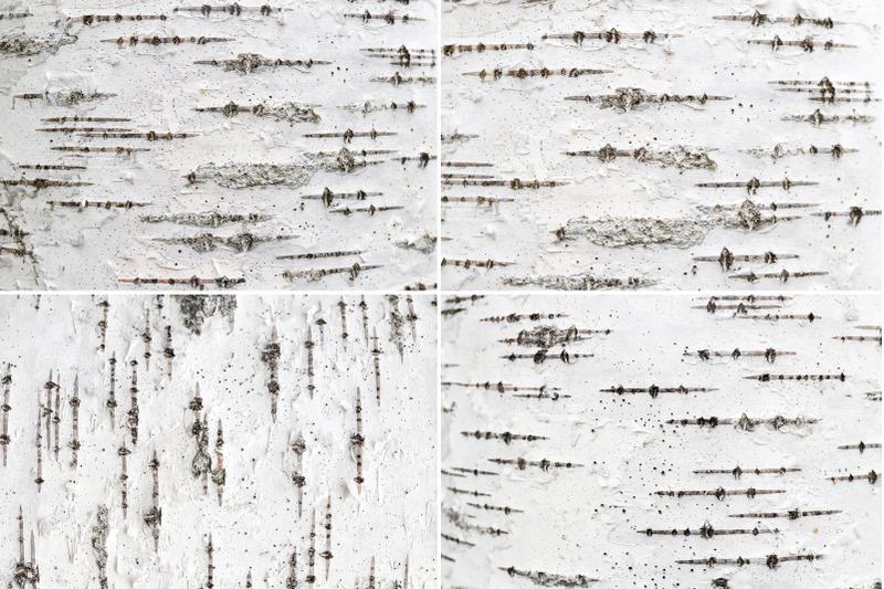 12-birch-bark-background-textures