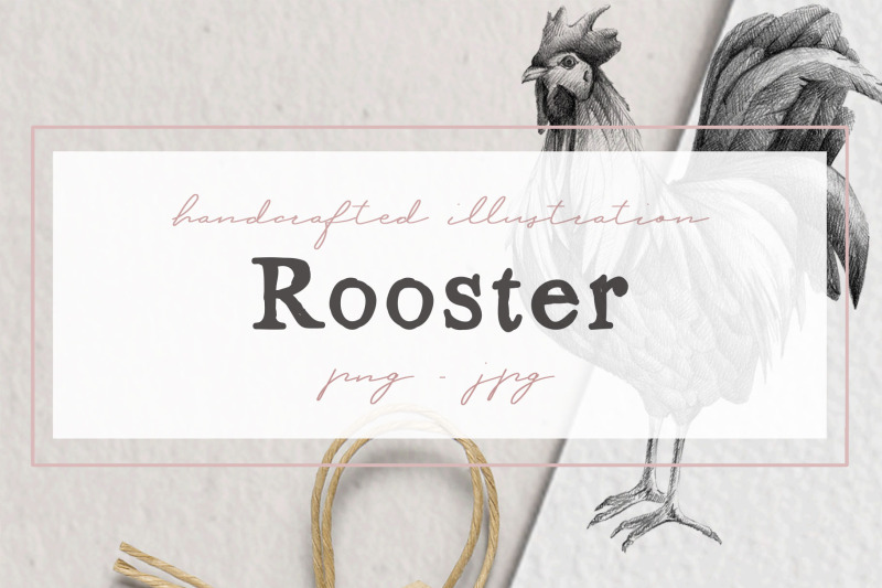 hand-drawn-rooster-illustration