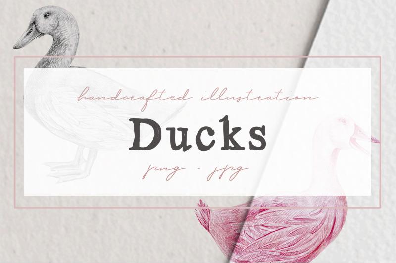 hand-drawn-ducks-illustrations