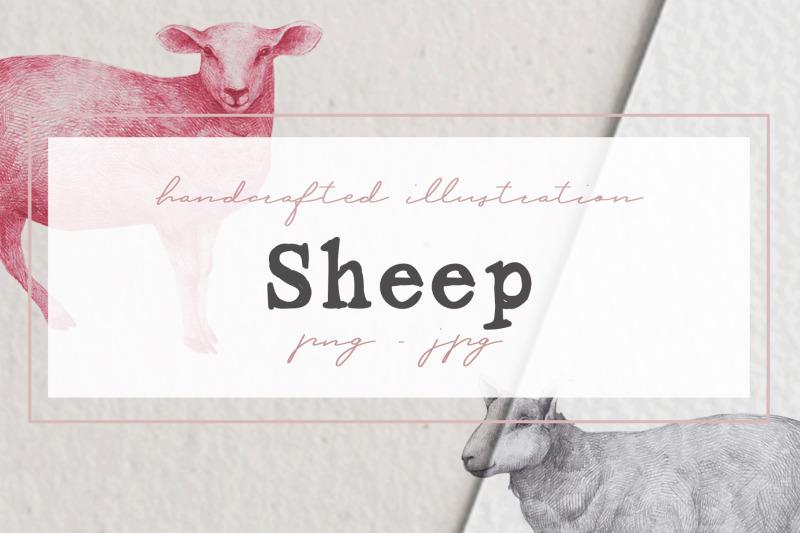 hand-drawn-sheep