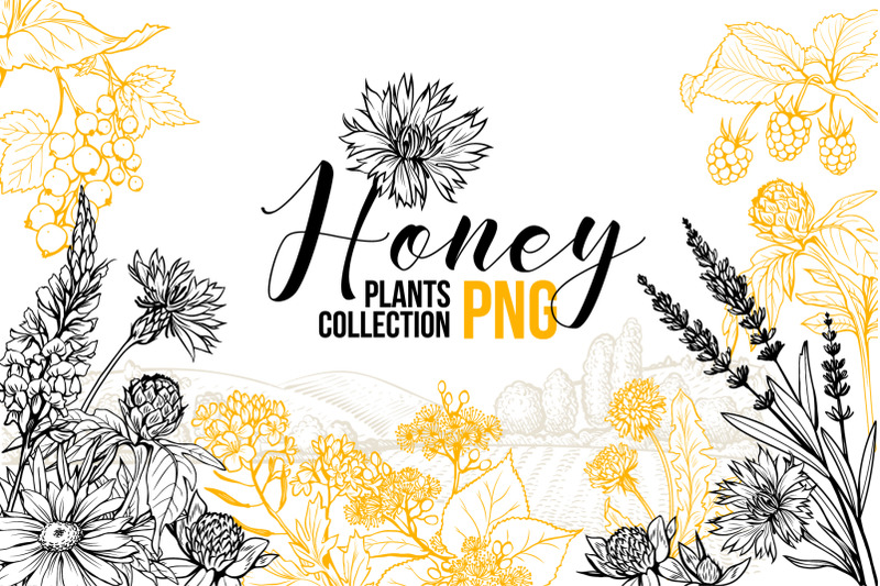 honey-plants-engraving-collection