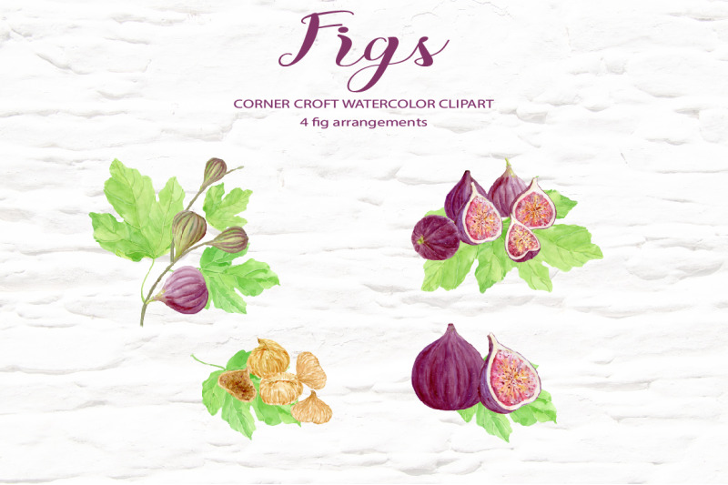 watercolor-fig-clipart
