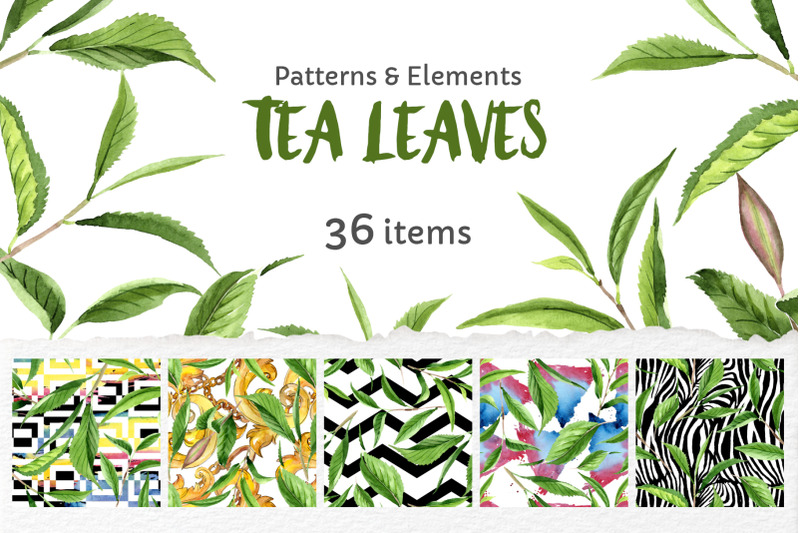 green-tea-leaves-watercolor-png