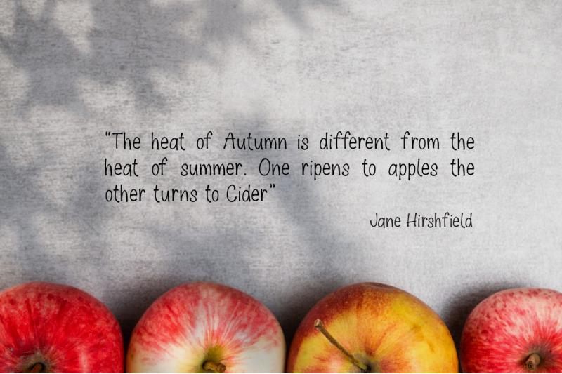 apple-cider-font