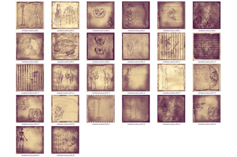 clandestine-anatomy-digital-paper