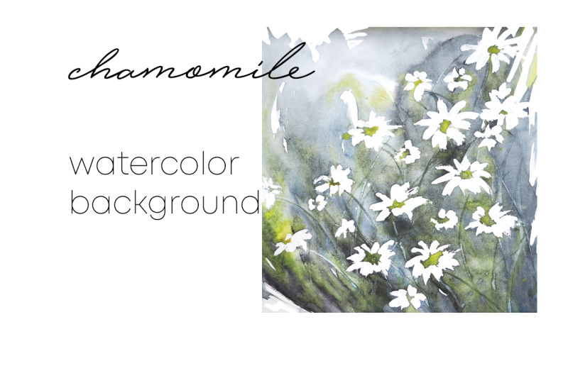 chamomile-watercolor-background