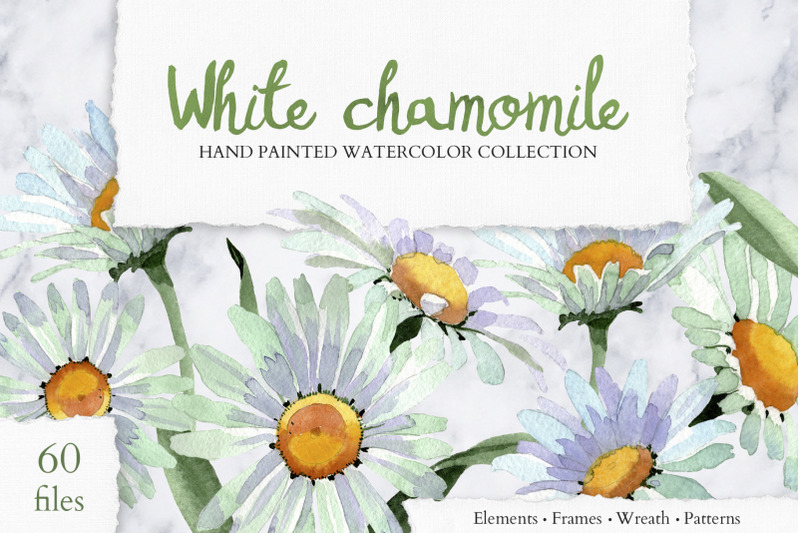 white-chamomile-flowers-watercolor-png