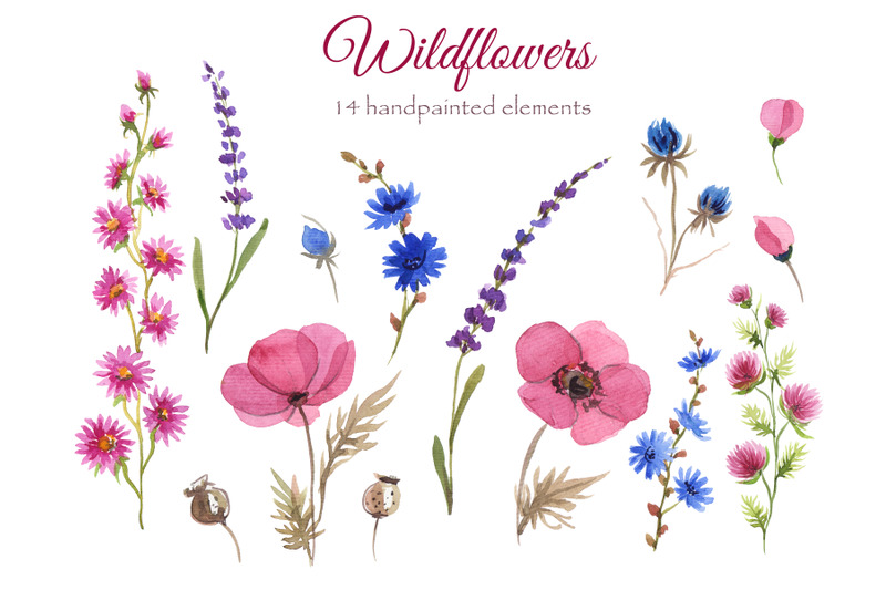 wildflowers-watercolor-collection