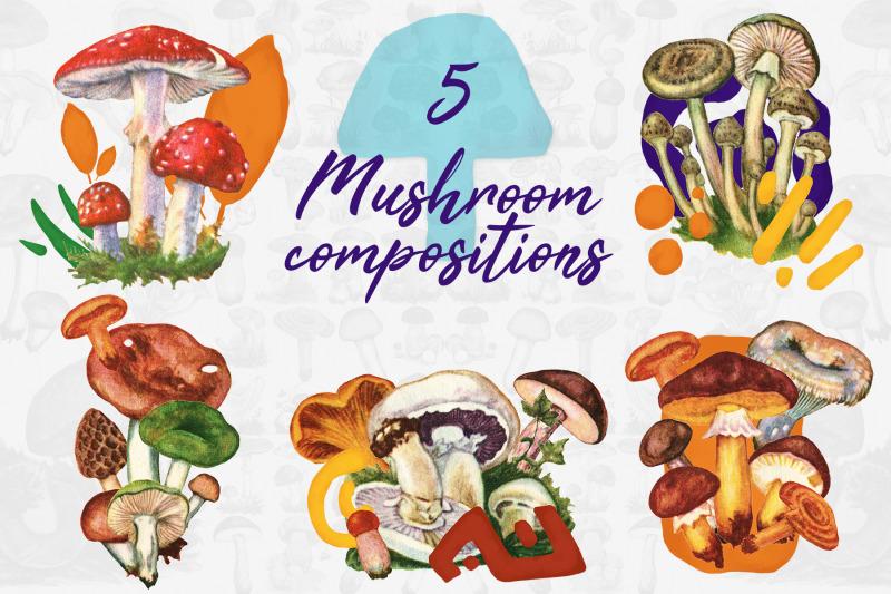 5-mushroom-compositions