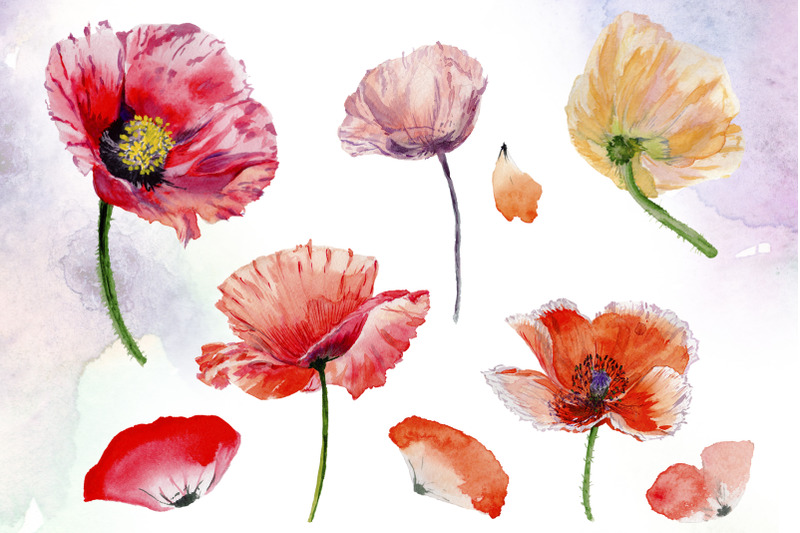 poppy-red-flower-watercolor-png