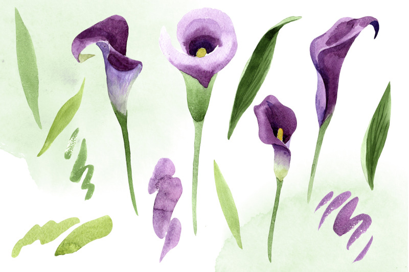 calla-lily-watercolor-illustrations-png