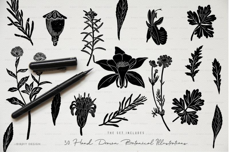 botanical-apothecary-clipart-amp-logos