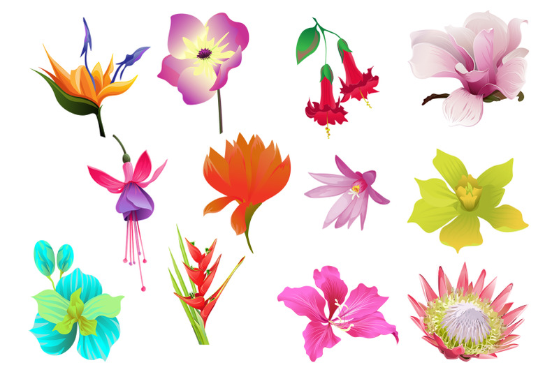 flowers-tropical-illustration-pack-watercolor-png