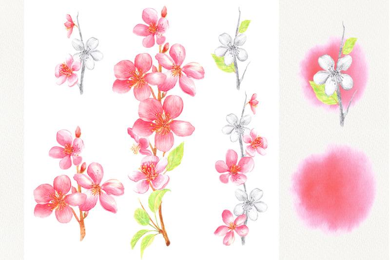 watercolor-cherry-blossom