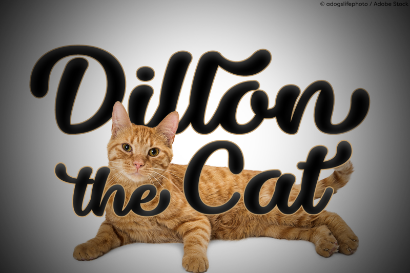 dillon-the-cat