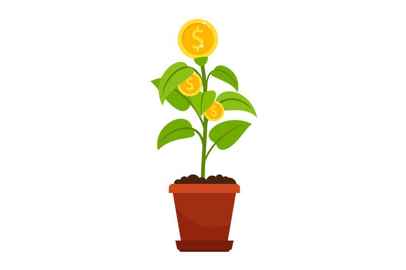 money-tree-in-flower-pot