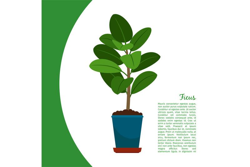 ficus-plant-in-pot-banner