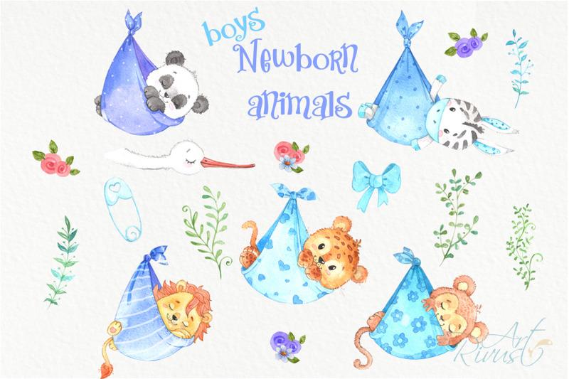 it-039-s-a-boy-newborn-animals-clipart-png-download-african-safari-clipar