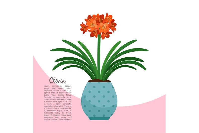 clivia-plant-in-pot-banner
