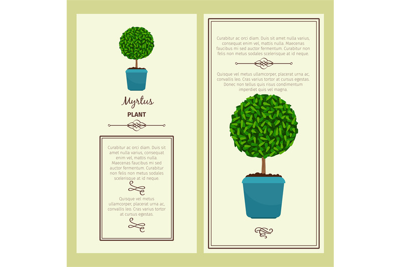 greeting-card-with-myrtus-plant