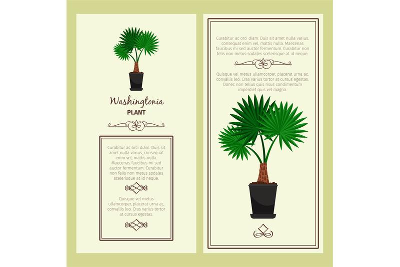 greeting-card-with-washingtonia-plant