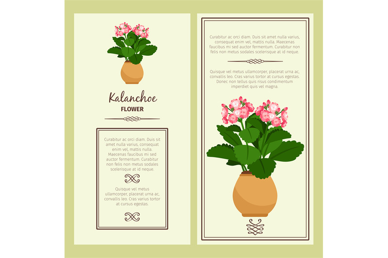 kalanchoe-flower-in-pot-banners
