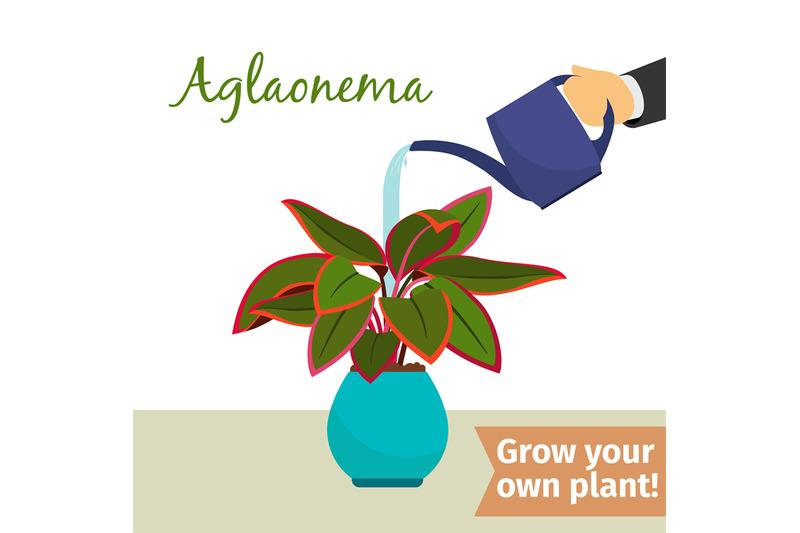 hand-watering-aglaonema-plant