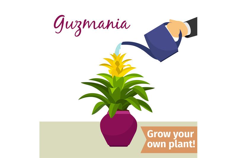 hand-watering-guzmania-plant