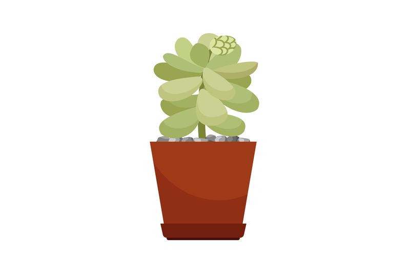 cactus-in-brown-flower-pot