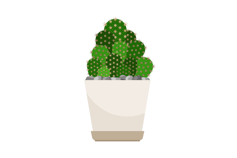 cactus-house-plant-in-white-flower-pot