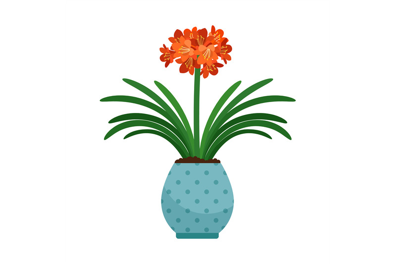 clivia-house-plant-in-flower-pot