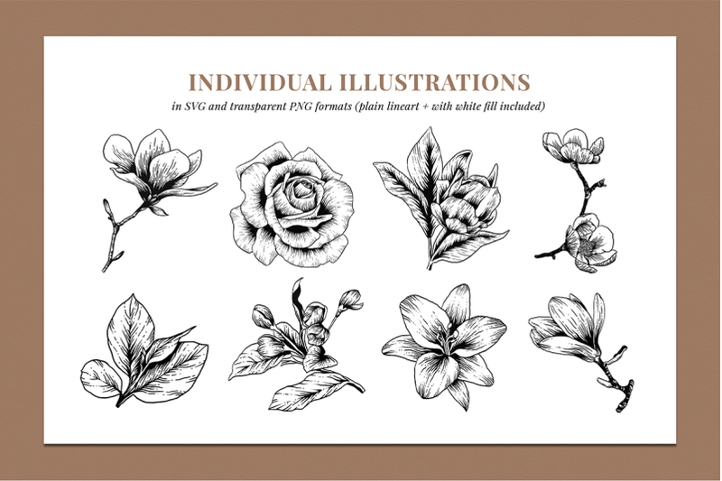 botanical-illustration-bundle