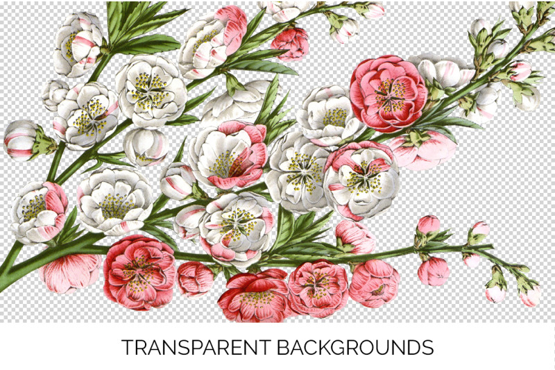 bouquet-blossom-clipart