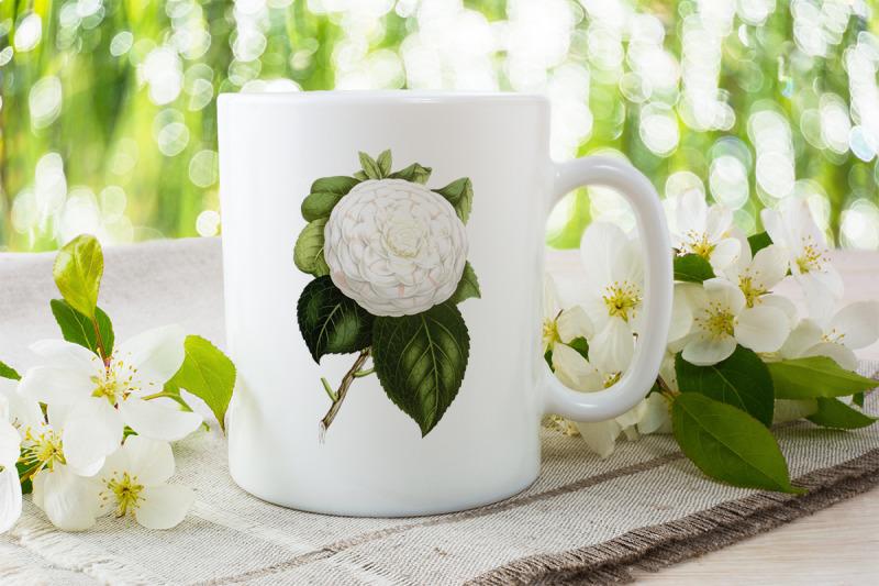 white-flower-clipart