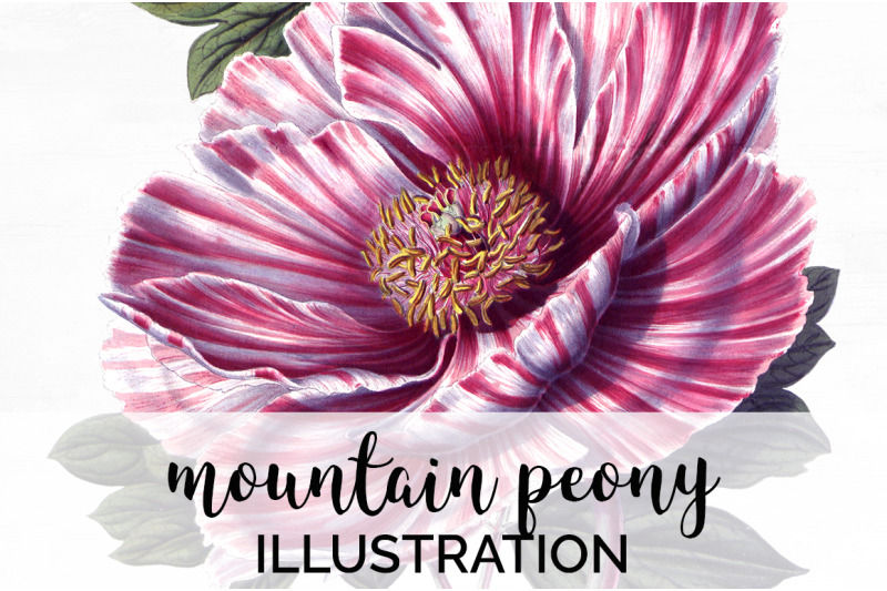 flowers-mountain-peony-vintage-clipart-graphics