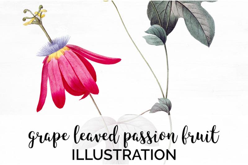 passion-fruit-clipart