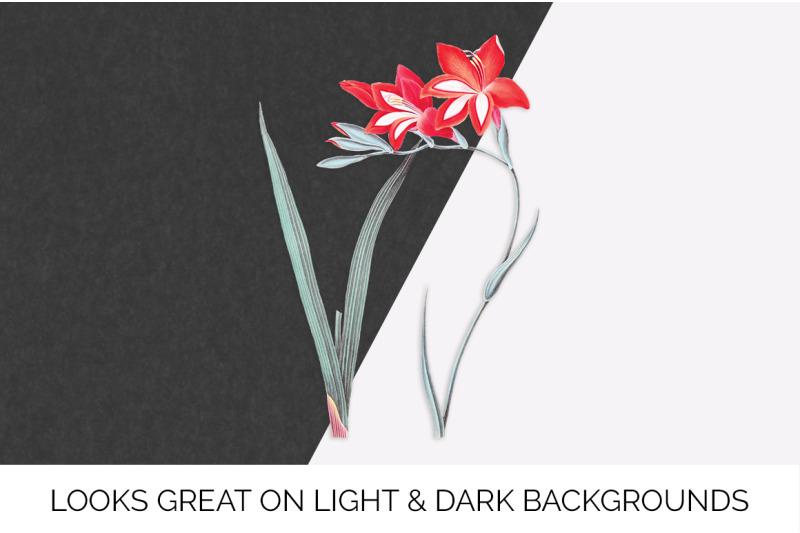 gladiolus-clipart