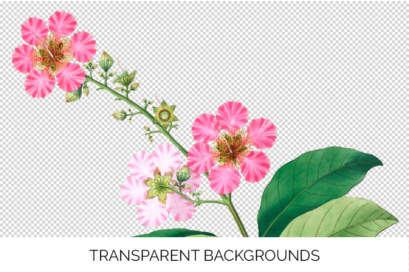 pink-flowers-clipart