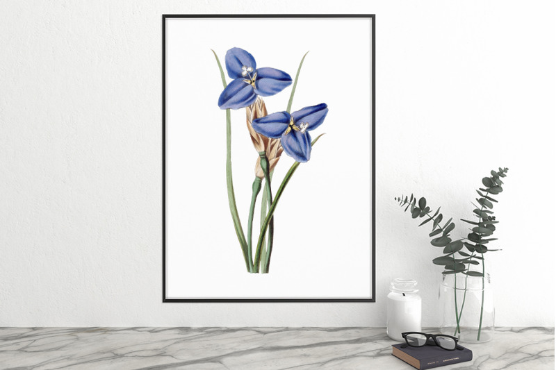 purple-flower-clipart
