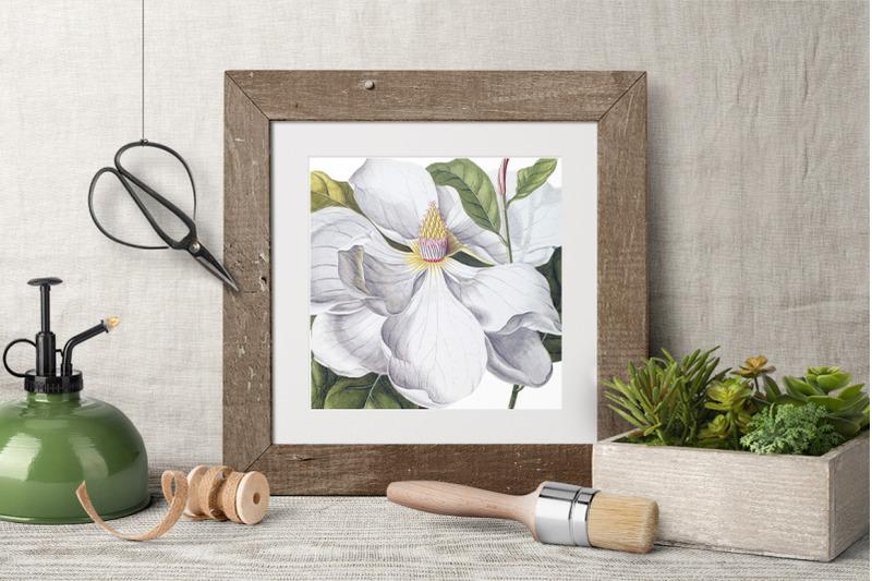flowers-magnolia-vintage-clipart-graphics